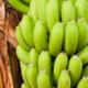 【脳活通信46】黒バナナを2本、毎日食べると凄いことが起こる!